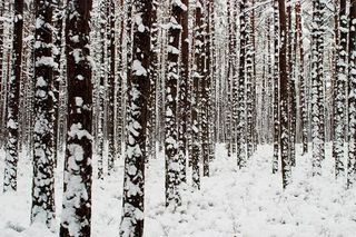 <3 nieve