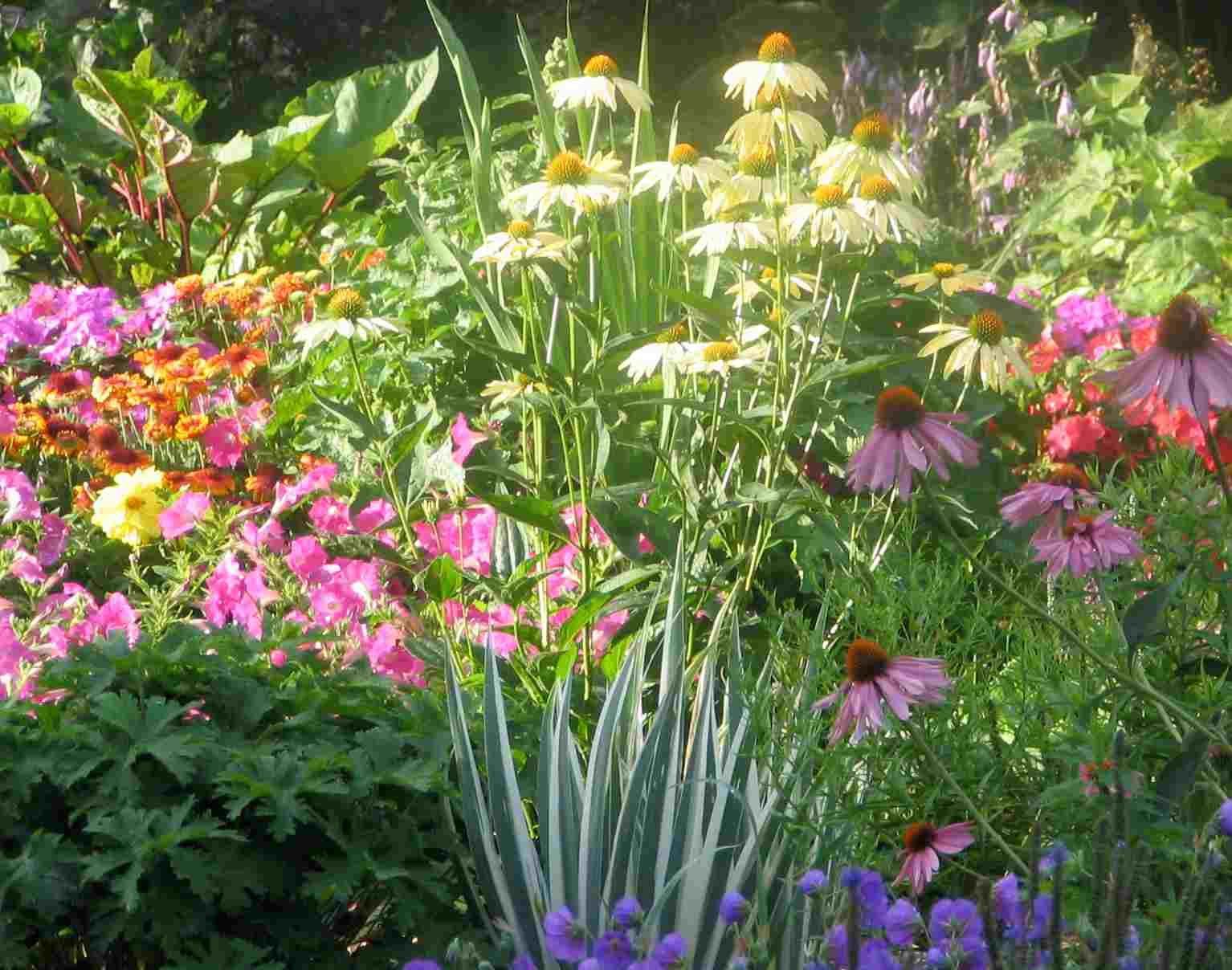 Perennial Flowers Shady Herbaceous Perennials Sewing Perennial