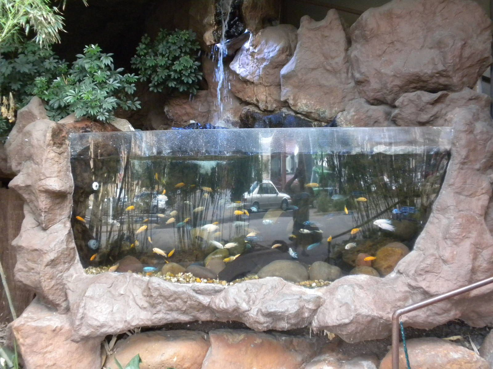 Exceptional Outdoor Aquarium   Google Search
