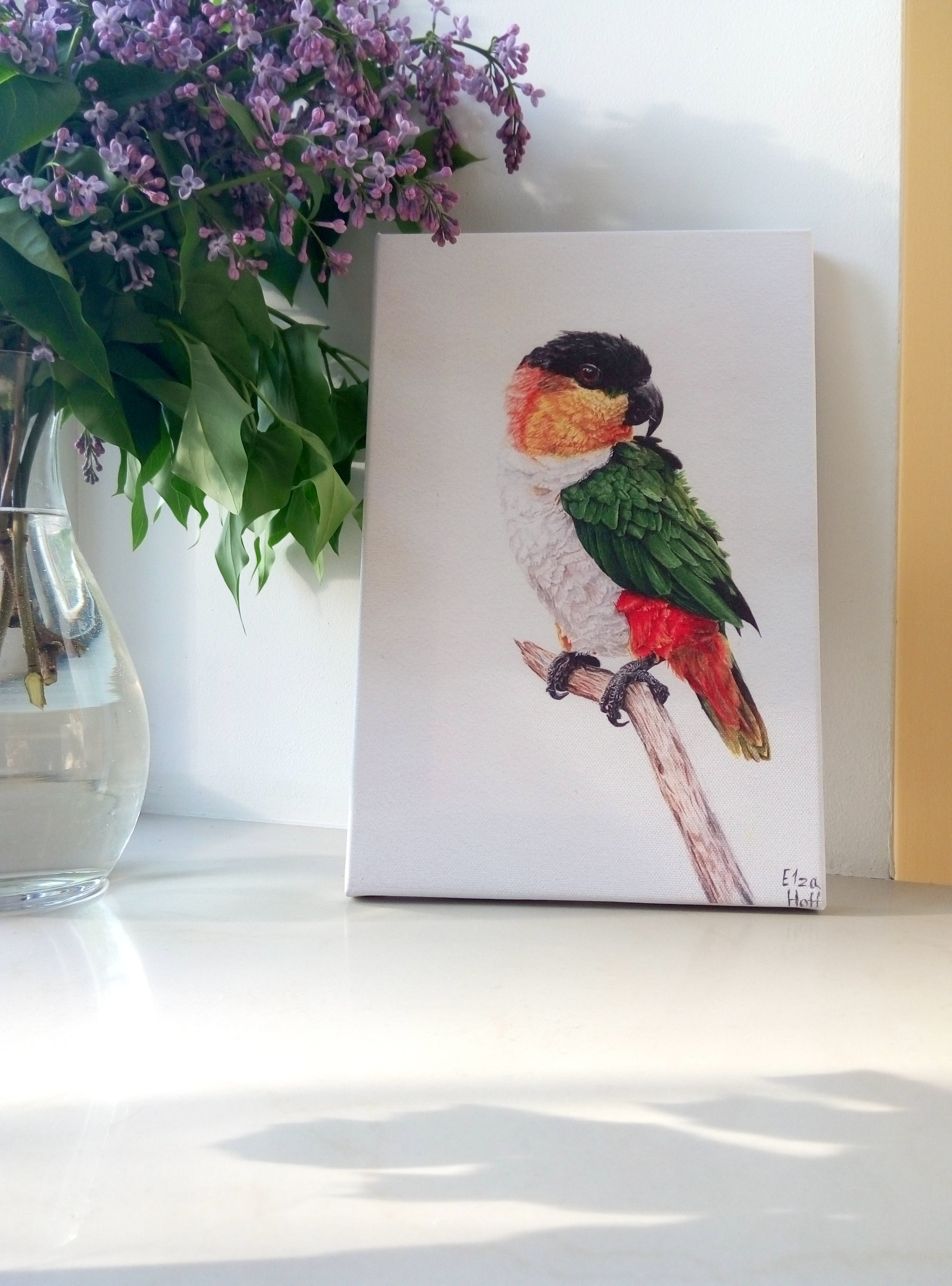 So Here Is A First Print Of May Painting Of Caique Ideer Til Tegning Tegning Ideer