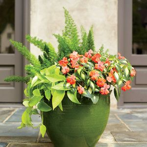 """Bring On the Sun! Love this combo! Foxtail fern, New Guinea impatience and  """"Limelight"""" golden pothos."""