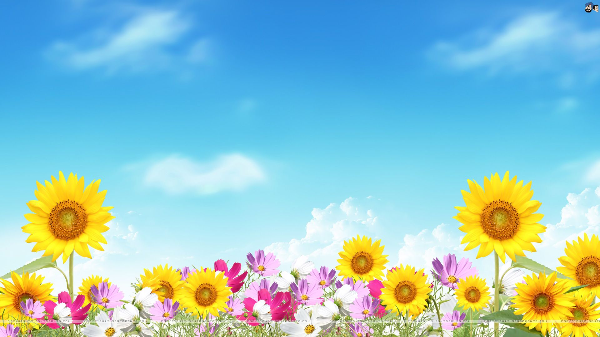 Image For Free Summer Flowers Computer Backgrounds Food Bread