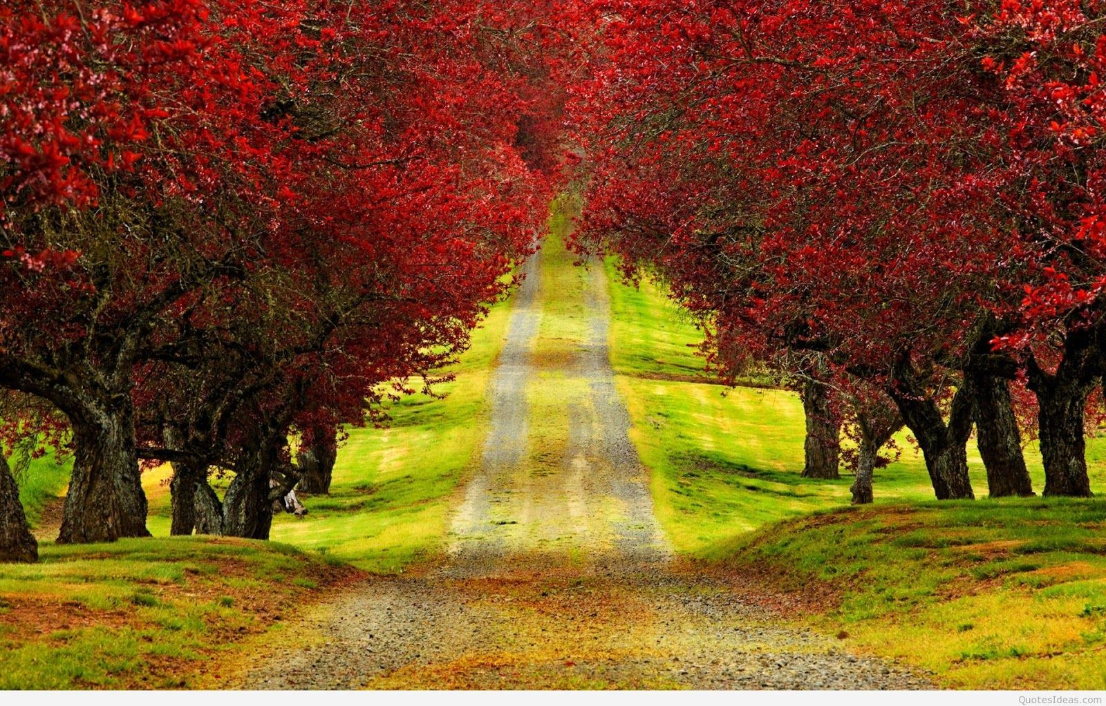 Hd wallpaper nature download - Nature Wallpaper Hd For Desktop Free Download Full Size Full Hd