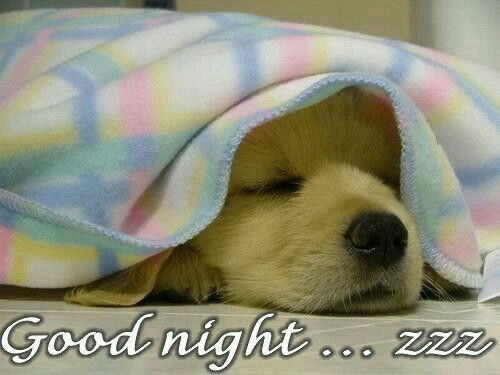 Image result for good night quotes dogs