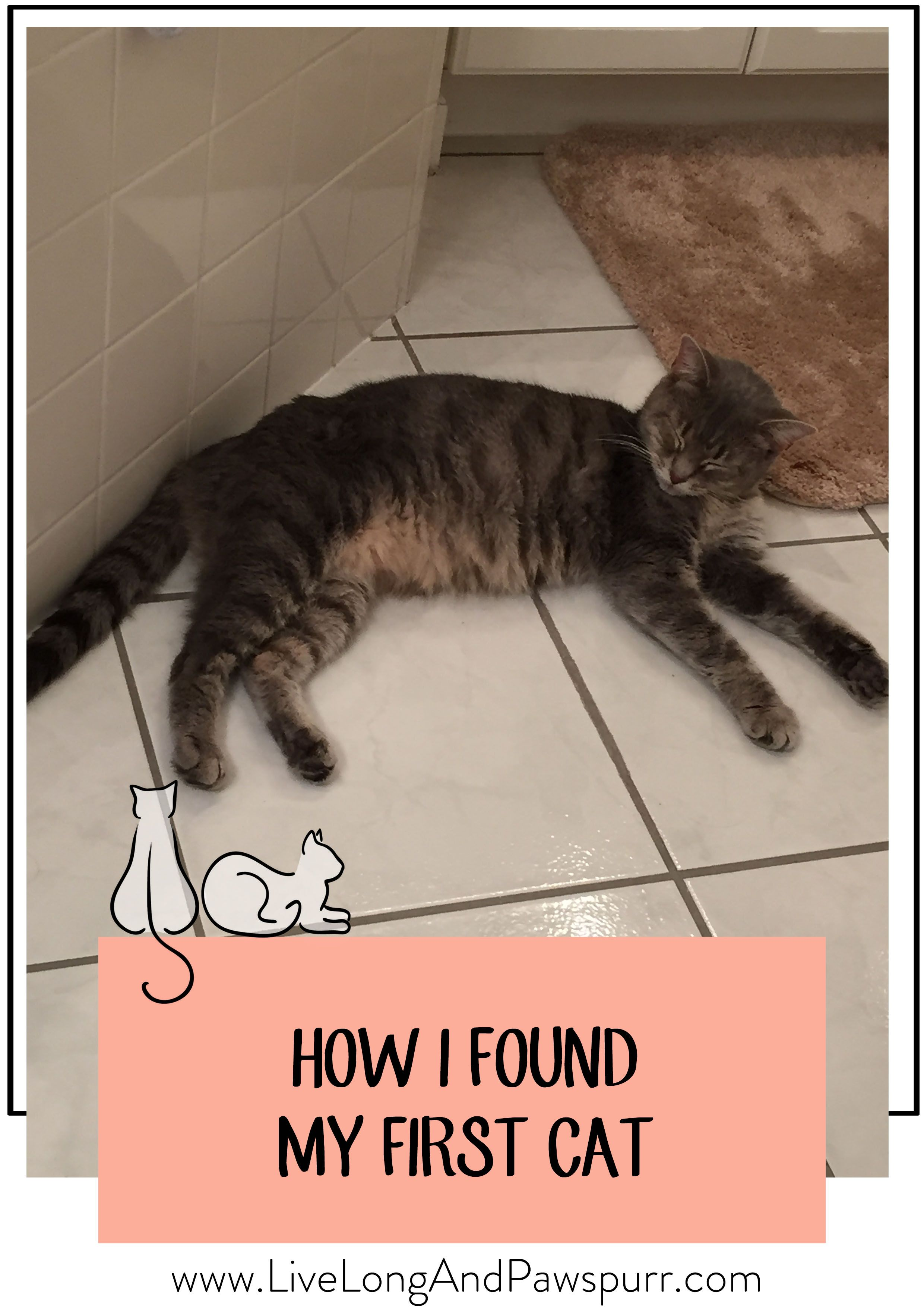 How I Found My First Cat Live Long And Pawspurr Cat Training Cats American Shorthair Cat