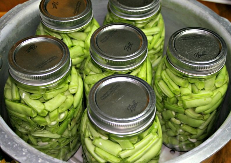 Canning Fresh Green Beans Gourmet