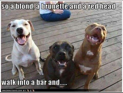 Pitbull Jokes Nanny Dog Pets Cute Animals