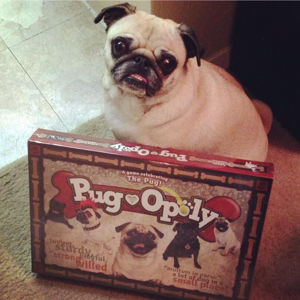 From Twitter Spikeandzira Our Favorite Game Is Pugopoly Of Course Pugchat Pugs Happy Customers Dogs