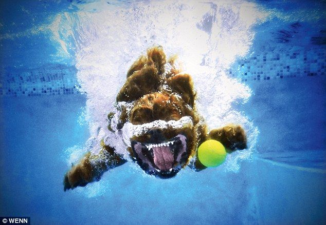"Great image of a diving dog. Love the ""smile"" :)"