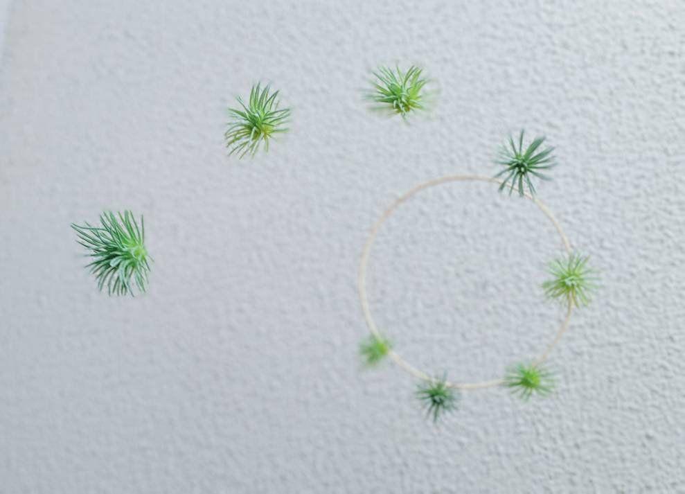 Pin On Succulent Decor