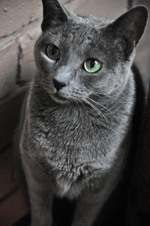 Imagen Sobre Gatos Grises De Margarita Gomez En Gatos Marg