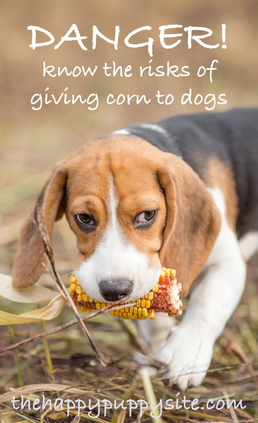 Can Dogs Eat Popcorn Can You Share This Tasty Treat With Your Dog