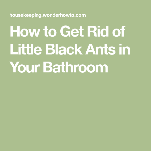 Forum Thread How To Get Rid Of Little Black Ants In Your Bathroom Amazing Ants In Bathroom Design Inspiration