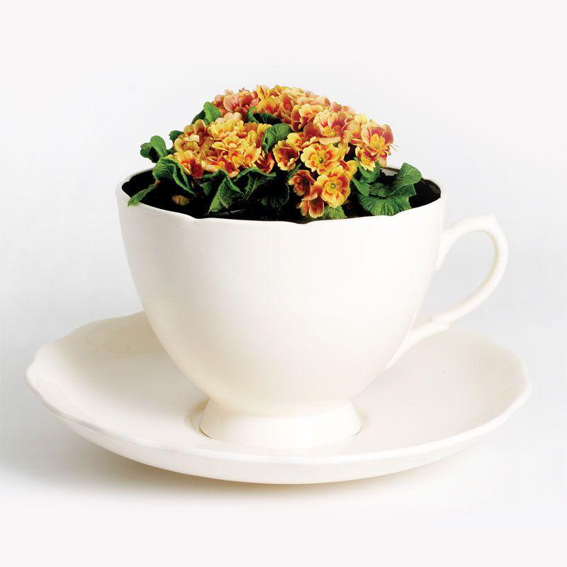 Plant Cup by Gitta Gschwendtner