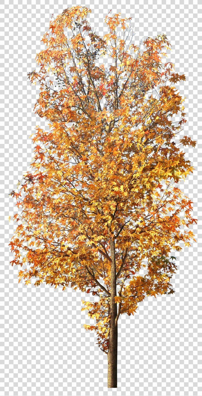 Tree Clip Art Tree Png Tree Autumn Blog Branch Deciduous Png Clip Art Autumn Trees