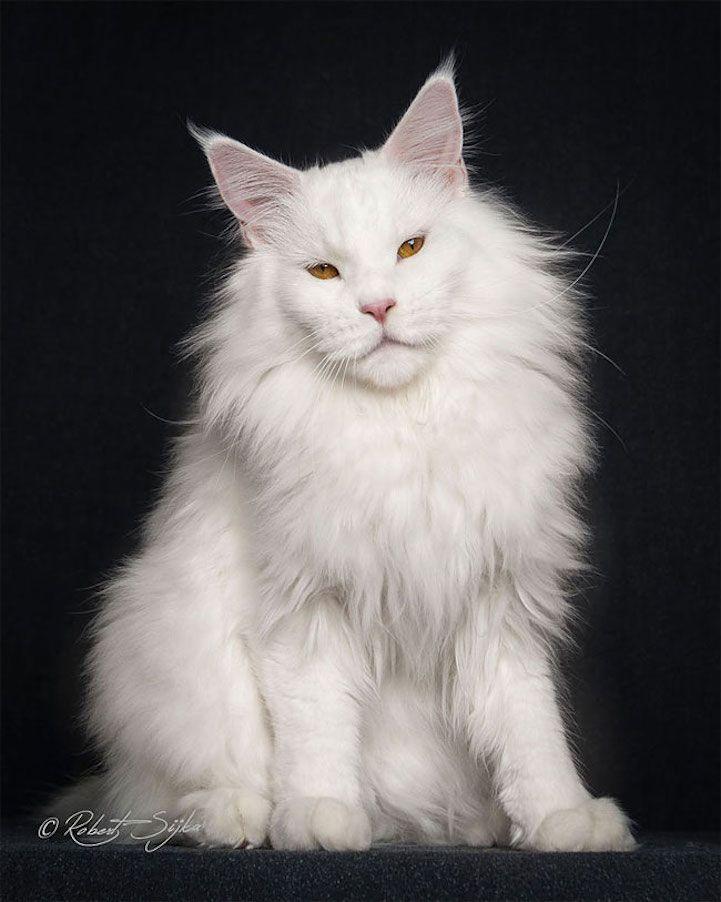 Pin On Cats My Spirit Animal