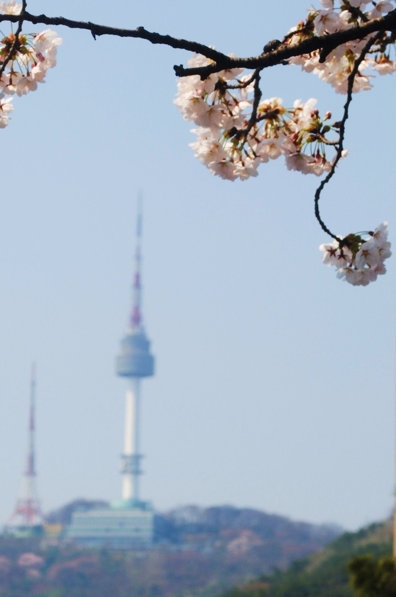 Seoul Tower During Cherry Blossom Season Seoul South Korea Korea Wallpaper South Korea Seoul South Korea Photography