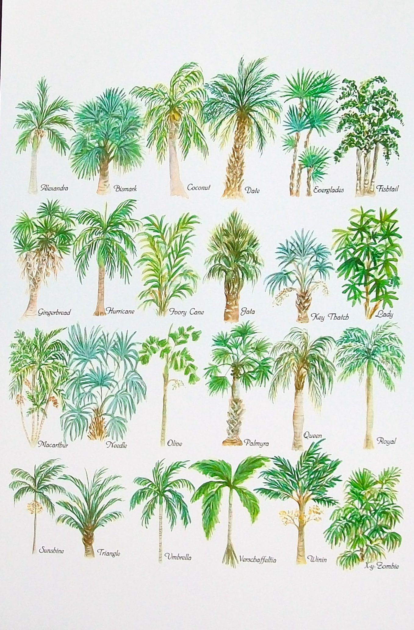 Palm tree alphabet watercolor print who knew there were so for Different types of plants and trees
