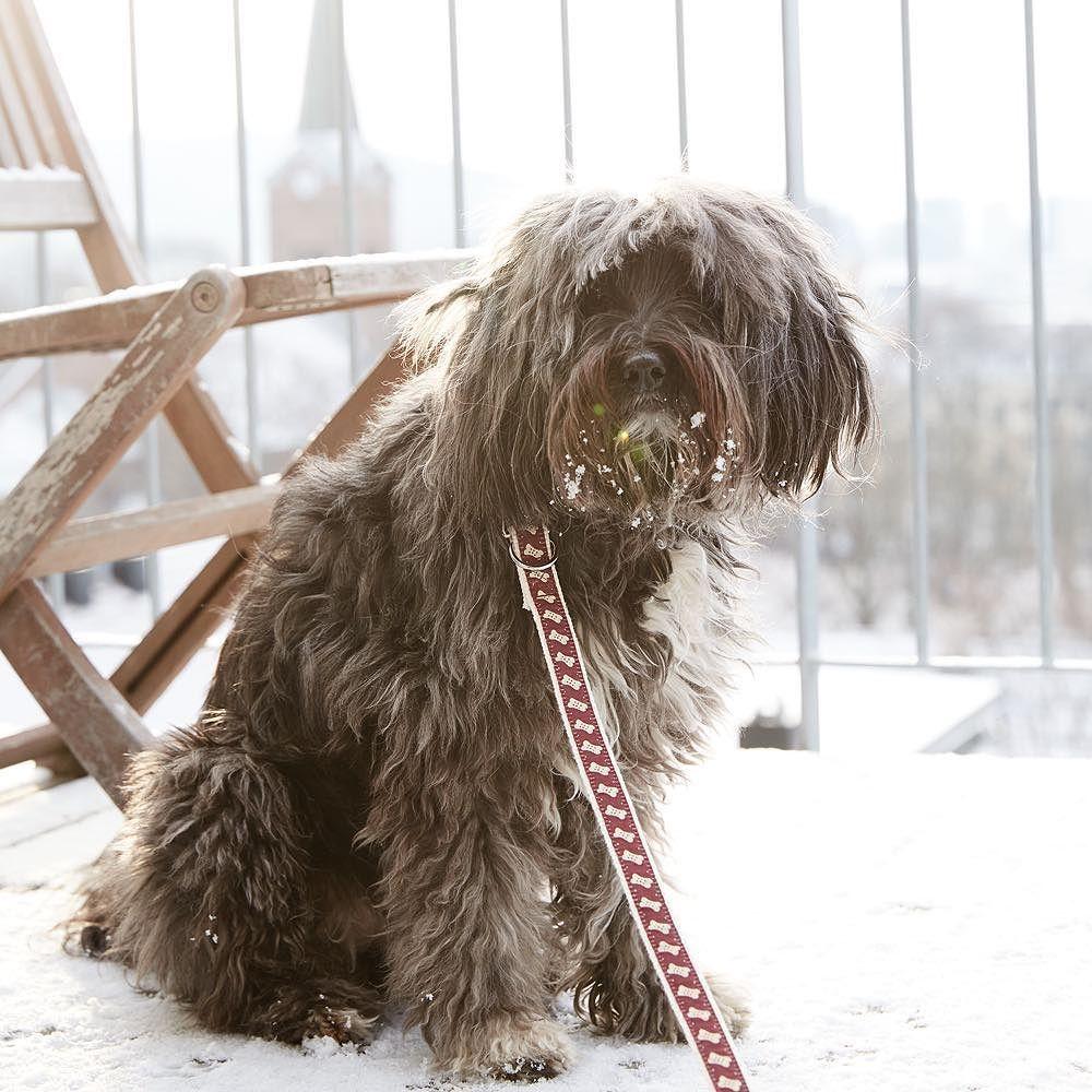 Magical winter in Oslo.. visit our store www.pattifurry.com    #oslo #grünerløkka #pattifurry #dog #hund #dogsandpals #mydogisthecutest #dogoftheday