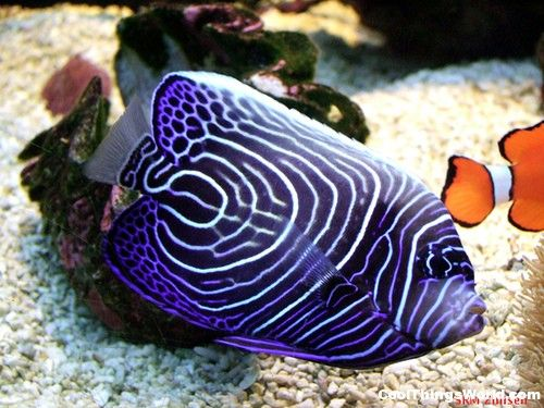 10 most colorful freshwater fish top ten most beautiful for Colorful freshwater fish