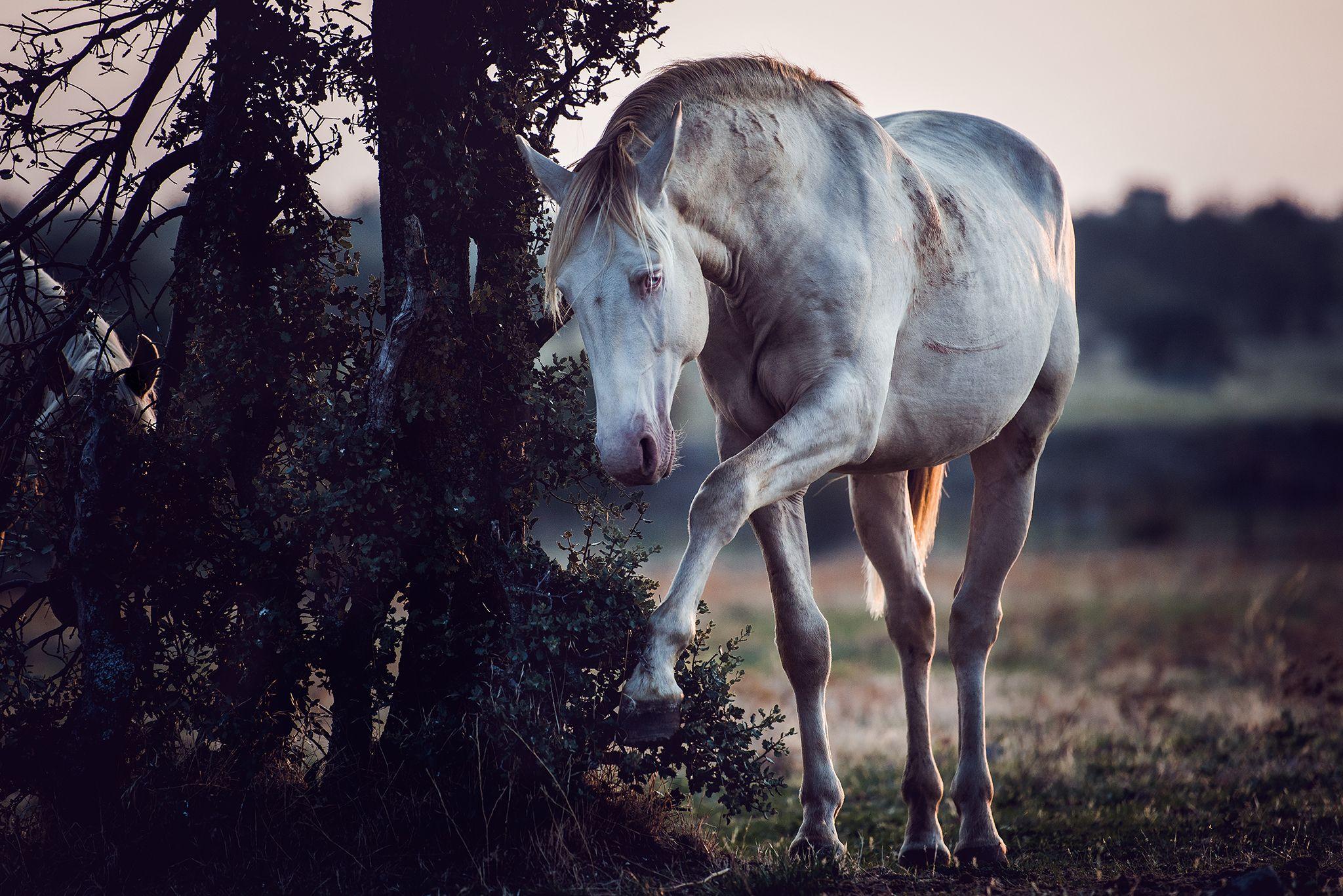 Pferde Anna Ibelshauser Photography Pferde Pferde Fotografie Hubsche Pferde