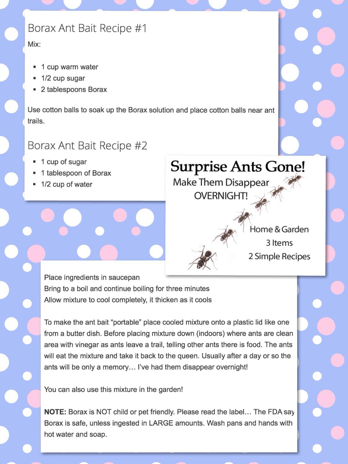 Get rid of ants overnight borax solution get rid