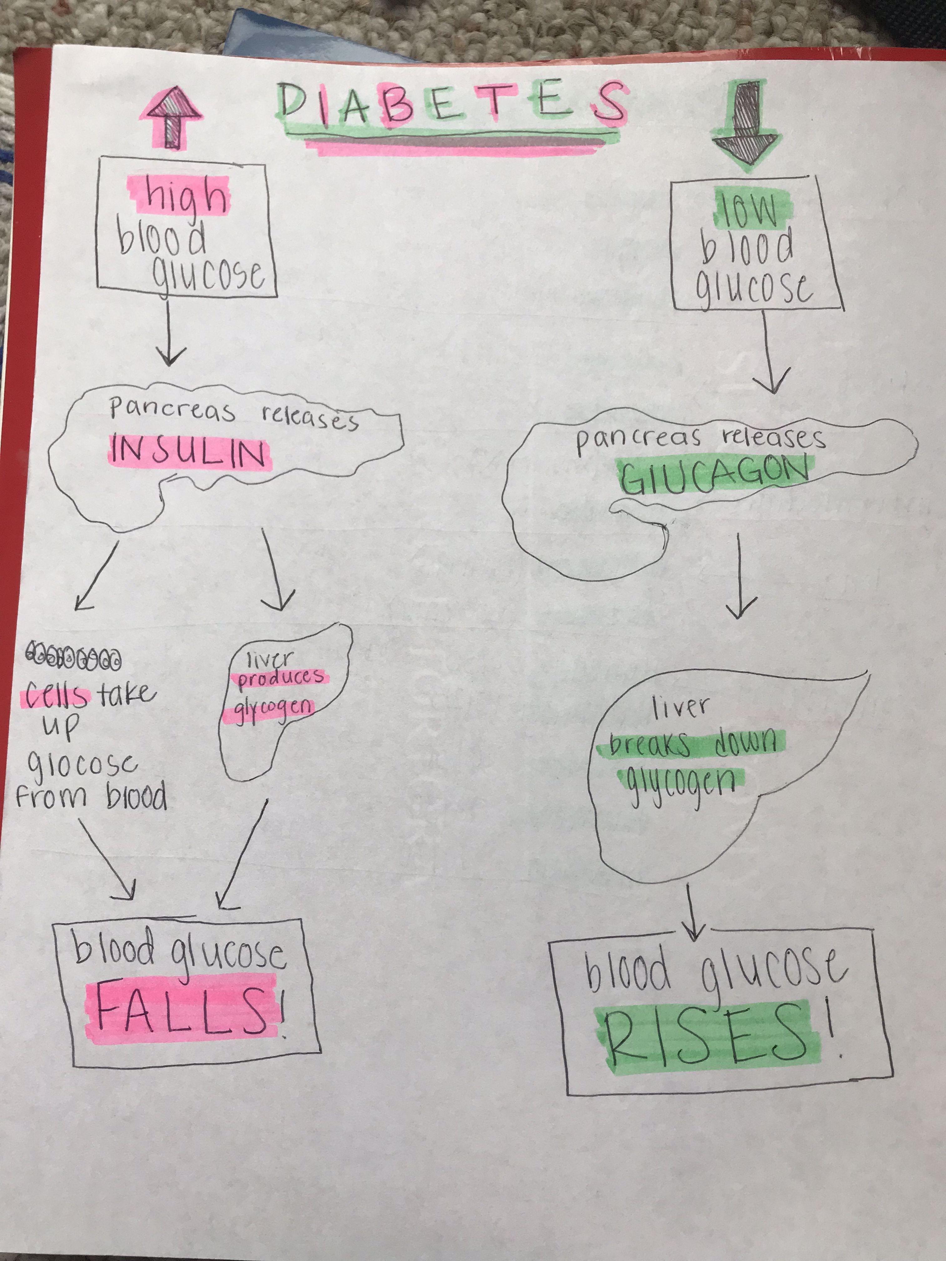 Diabetes Algorithm Nursing Nursing Student Nursing