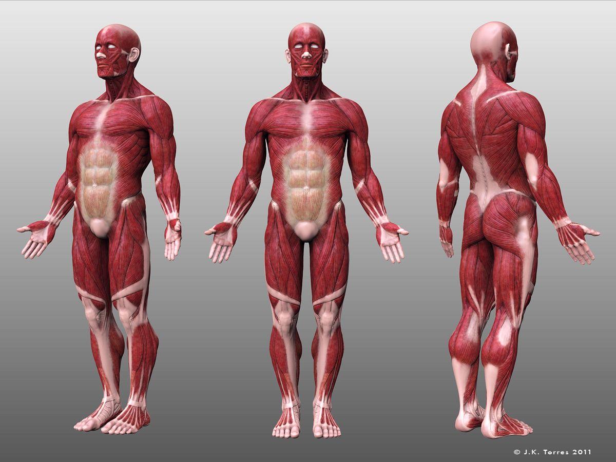 http://jktart.blogspot.com/p/3d-organic-modeling.html   Anatomy ...