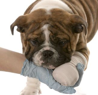 What To Do If Your Dog Starts Limping Puppy Care Dogs I Love Dogs