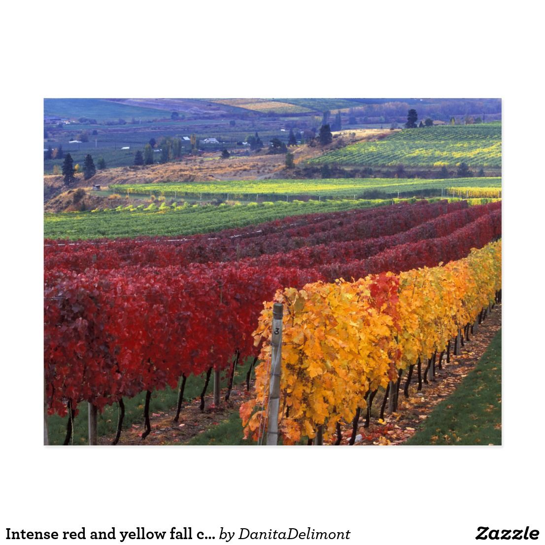 Intense Red And Yellow Fall Colors On Gehring Postcard Zazzle Com Fall Colors Postcard Color