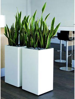 Images For Tall Ceramic Pots For Plants   Google Search