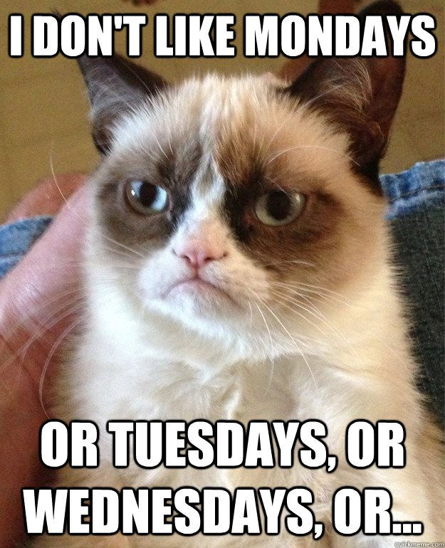 or thursdays or fridays or saturdays or sundays. haha grumpy cat