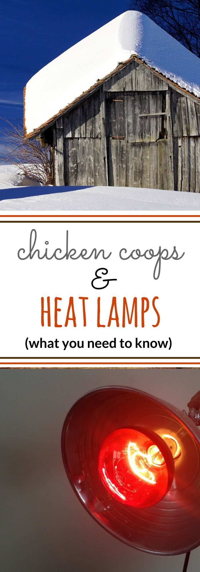 Does The Coop Need A Heat Lamp Raising Backyard Chickens Chickens Backyard Raising Chickens