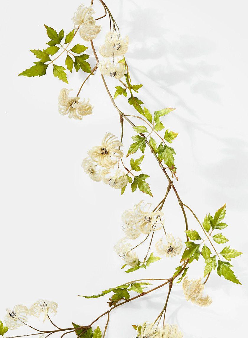 passion flower plants for sale