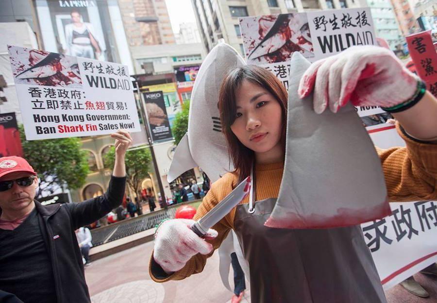 Protesters Target Hong Kong Restaurants Serving Shark Fin