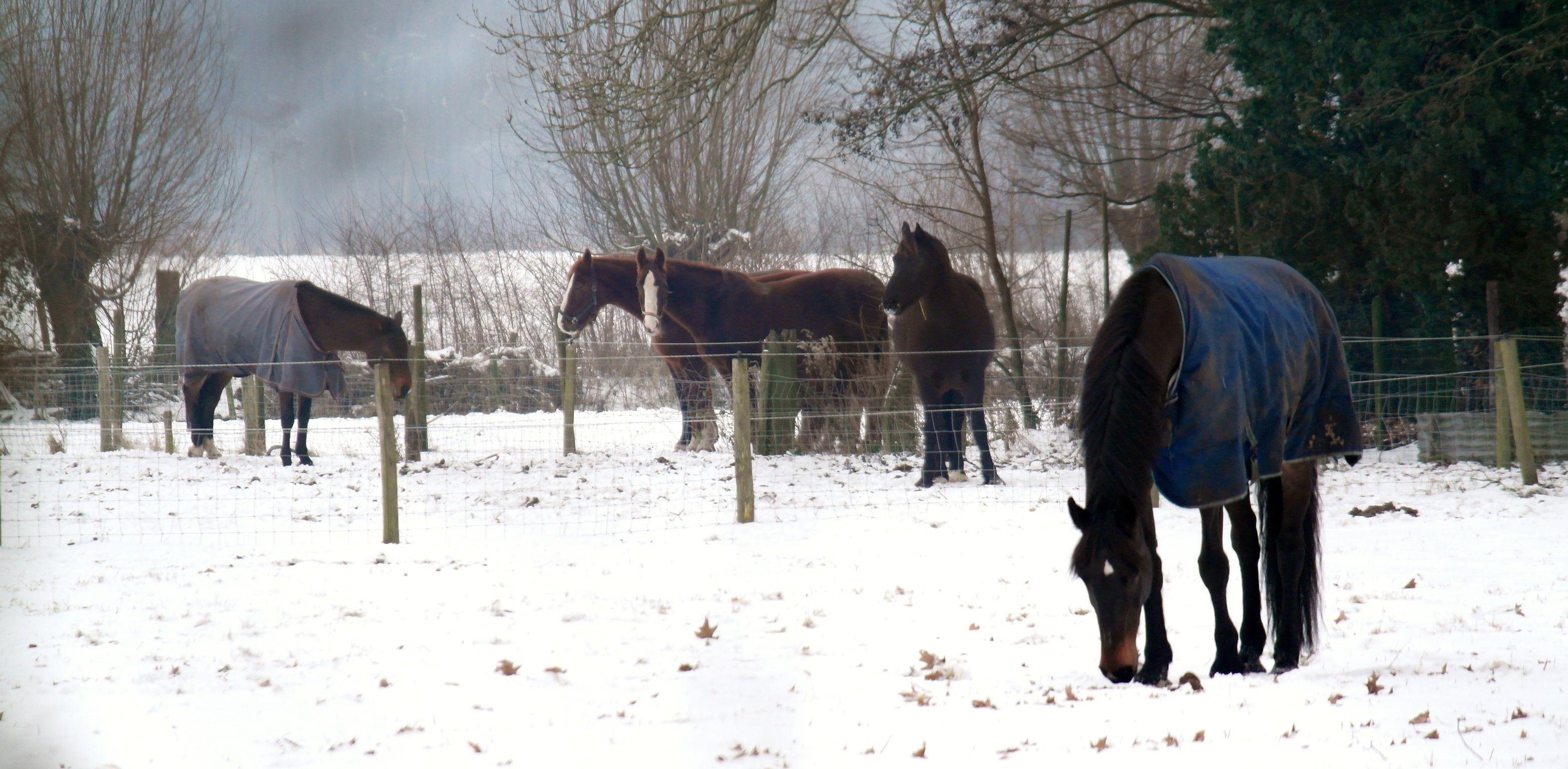 Hollandse winter..