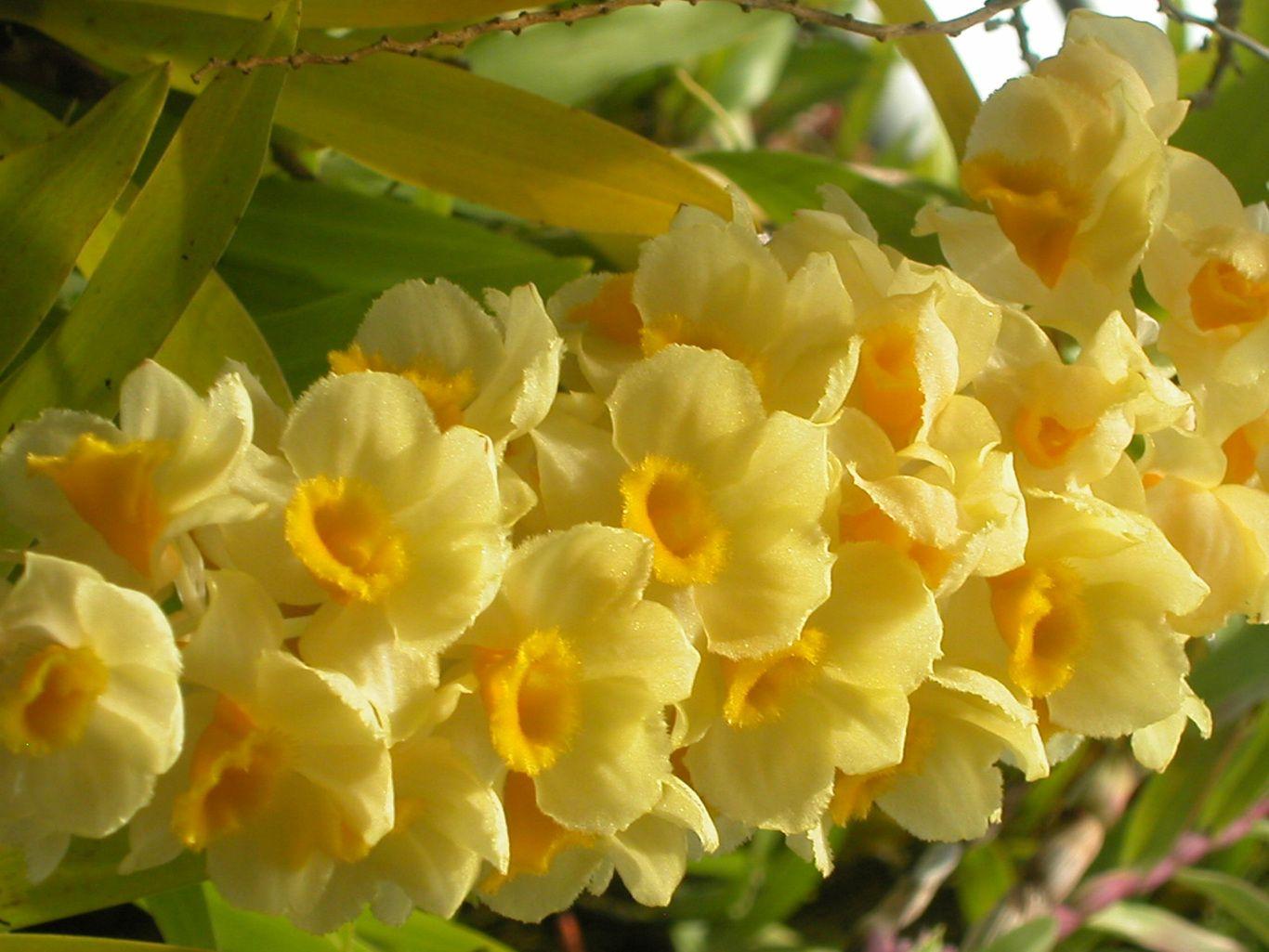 yellow flowers Google Search Yellow flower wallpaper