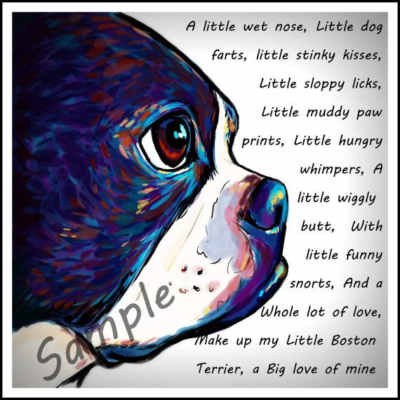 Hey I Found This Really Awesome Etsy Listing At Https Www Etsy Com Listing 175017042 My Little Boston T Boston Terrier Art Boston Terrier Boston Terrier Dog