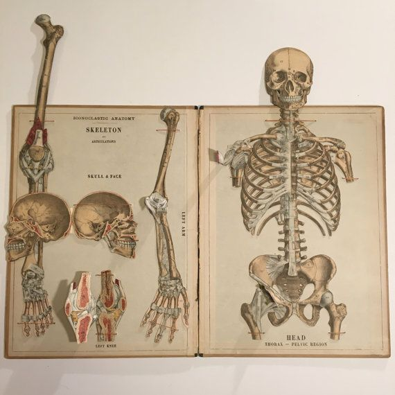 1880 Movable Atlas of The Human Skeleton XL Interactive | Anatomy ...