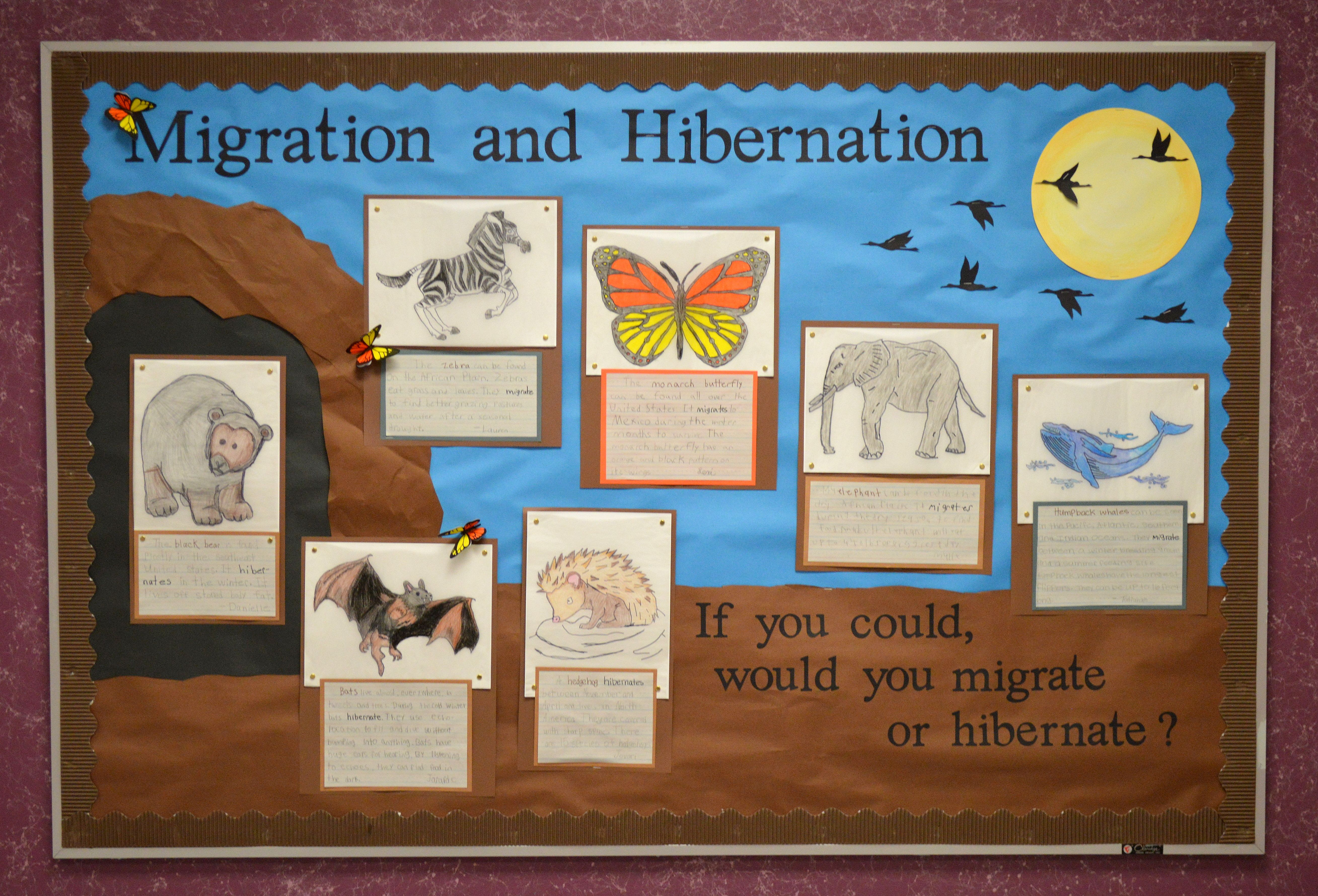 Bulletin Board About Hibernation And Migration