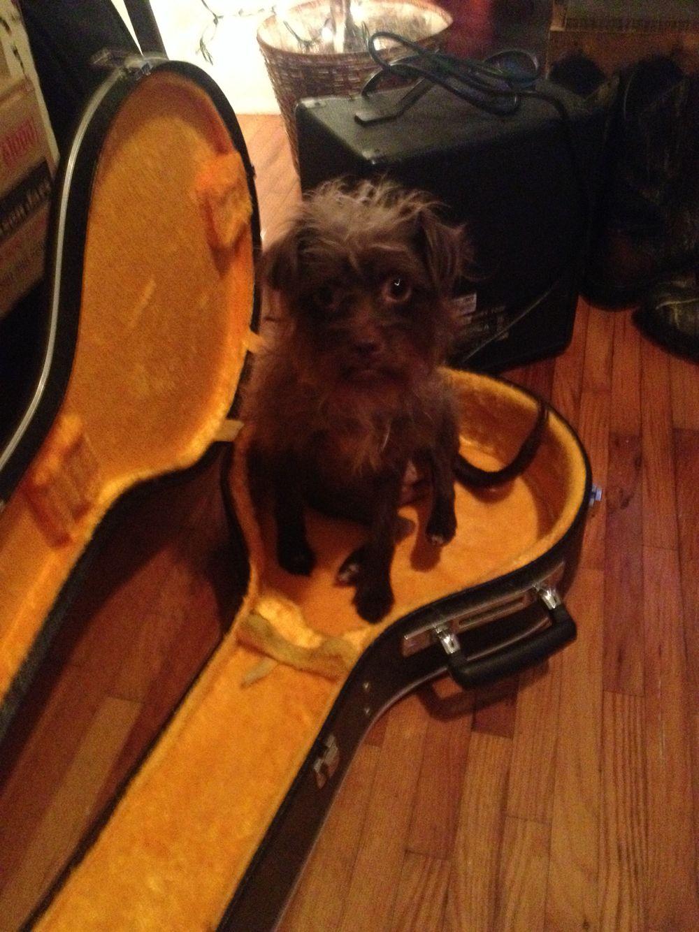 Willo in my banjo case lol