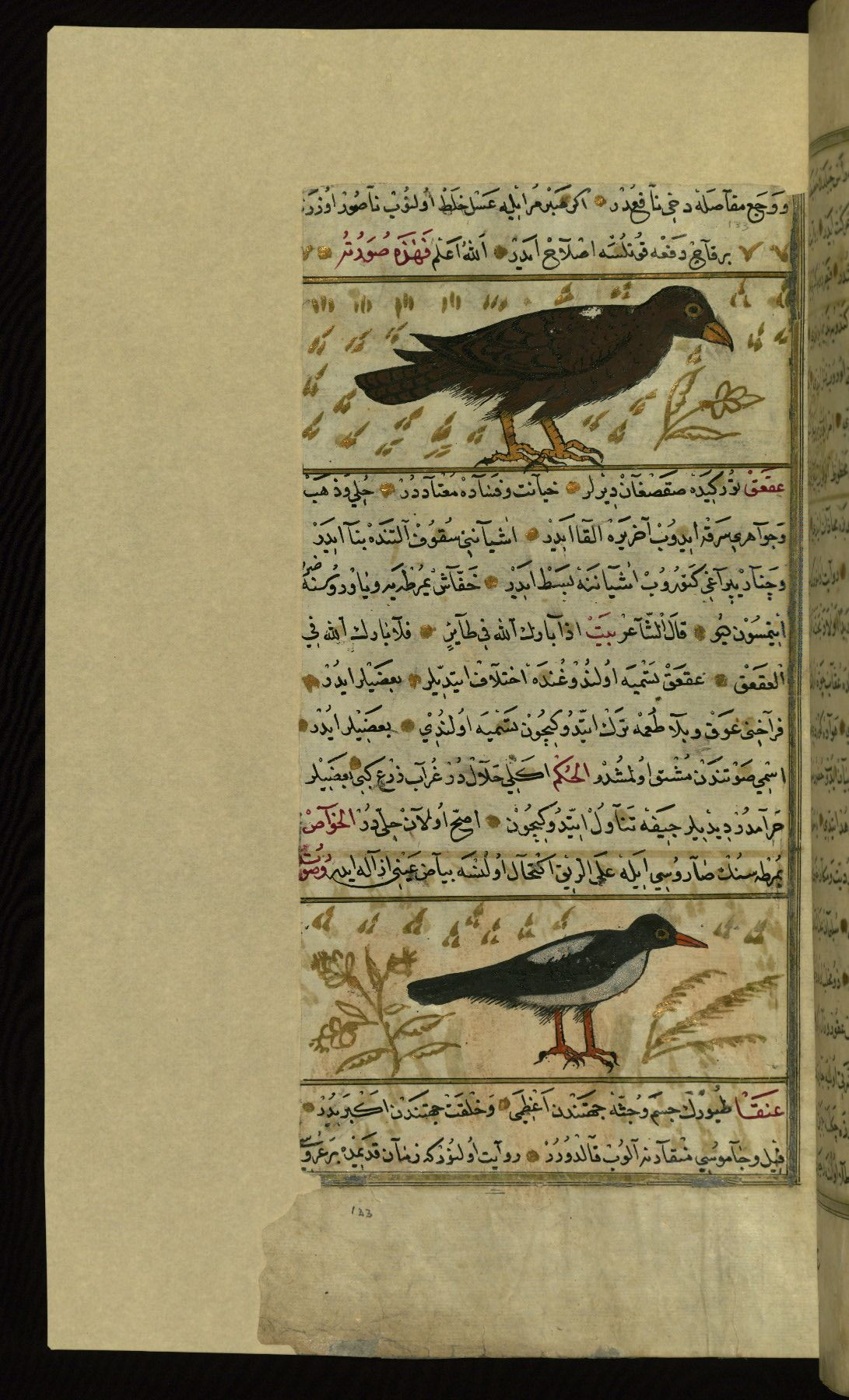 An eagle and a magpie Wonders of Creation by Qazwīnī 1293 was translated to Turkish in 1717  completed by Rūzmah-ʾi Nāthānī - W659