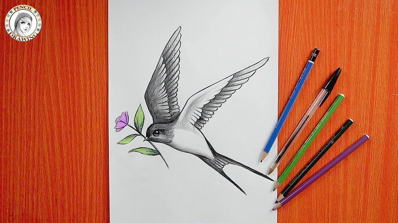 How To Draw A Bird رسم طائر رسم عصفور In 2021 Drawing For Beginners Bird Drawings Drawings