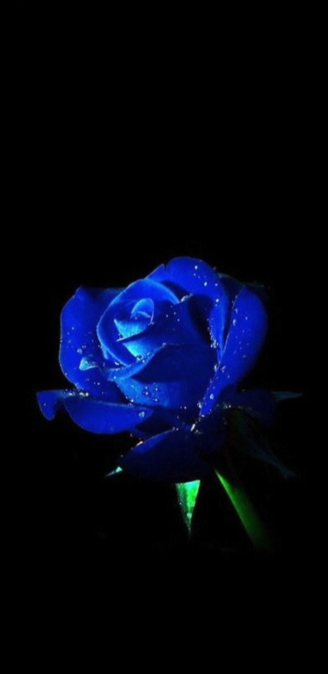 Pin By Naomi Wharton On Fractal Art Valentines Wallpaper Blue Roses Rose Wallpaper