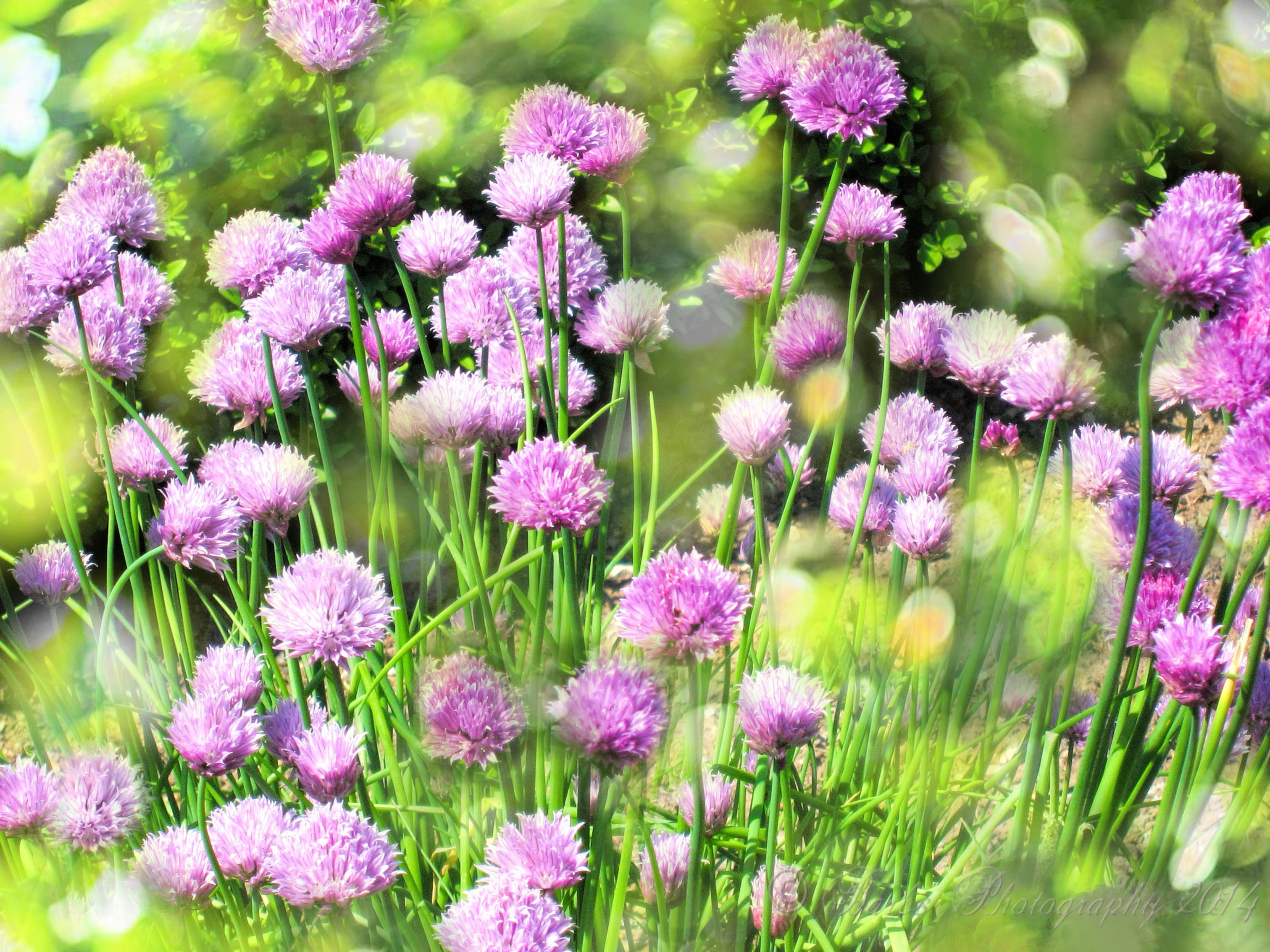 Herbs and flowers often found in roman gardens.