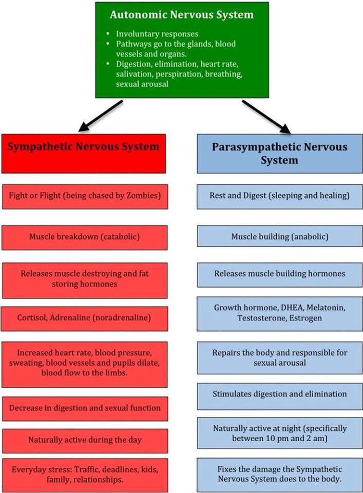 Sympathetic Vs Parasympathetic Nervous System Chart Nclex Prep And