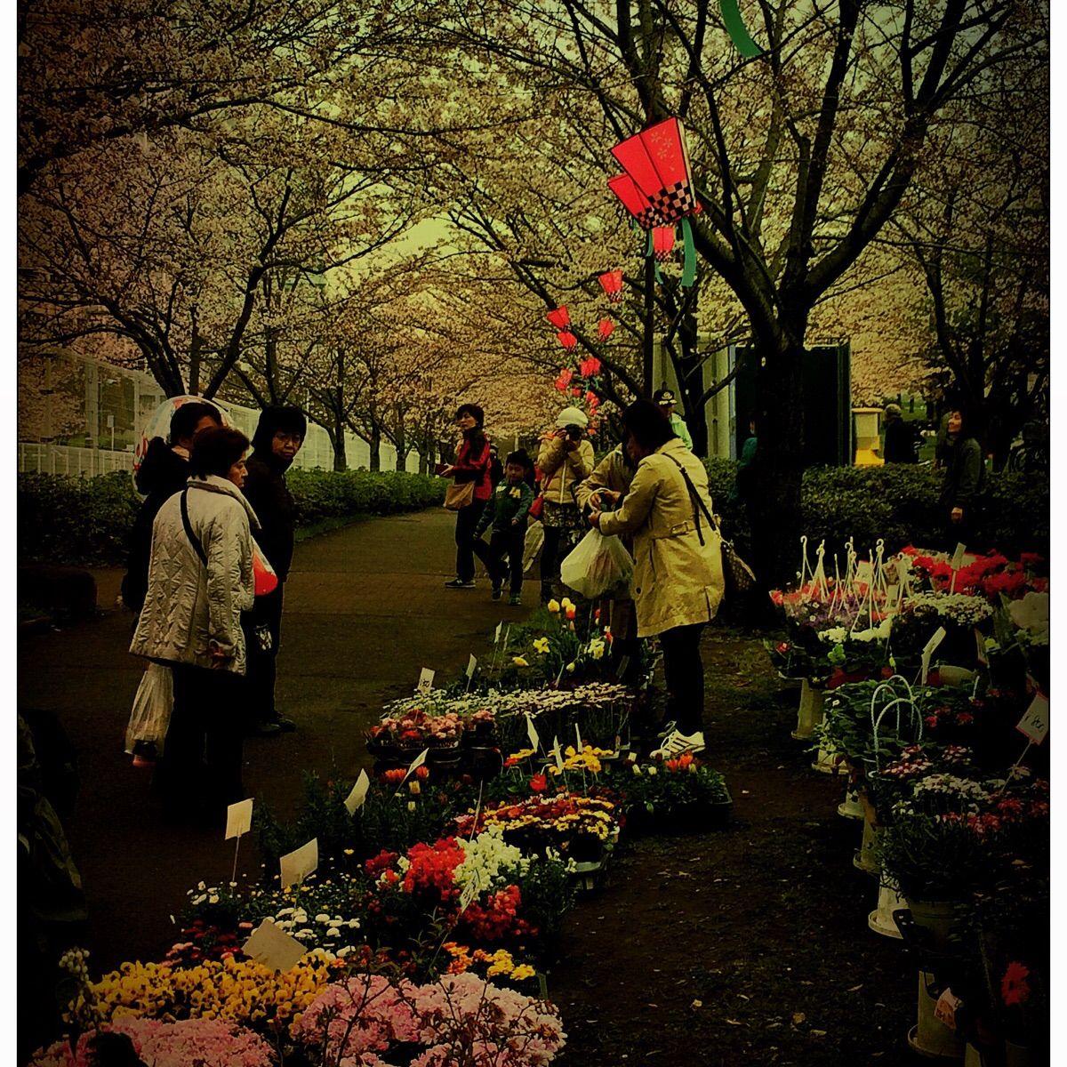 Flower Market Under The Shade Of Cherry Blossoms R Japanpics Flower Market Blossom Cherry Blossom
