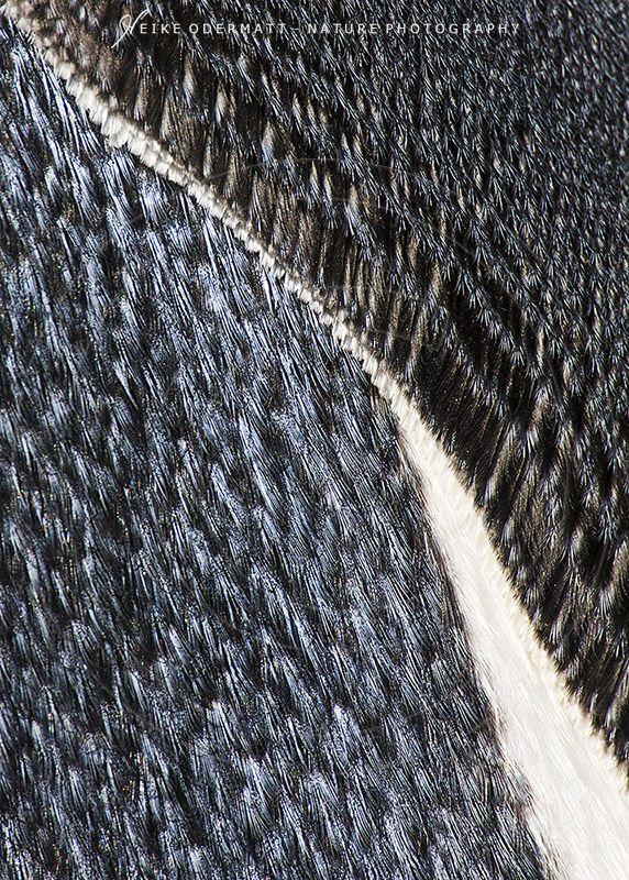 Heike Odermatt  Feathers from www.nl-playhouse.com