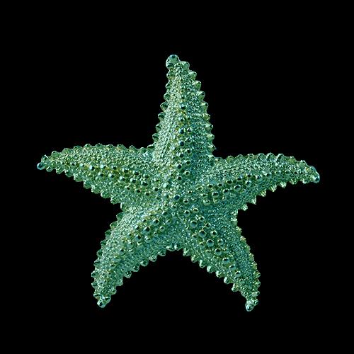 Cartoon Starfish Png Starfish Transparent Png Image Cartoon Starfish Sea Ocean Photos