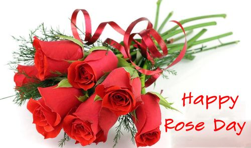 valentine day rose pic download